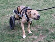 Handicapped Pets / がんばってるペットたち (障害を超えて)