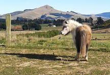 Horses - Cos I love 'em