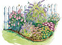 Home: Gardening: Butterfly Garden