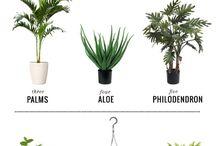 plant!!
