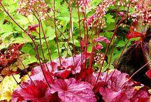 Flower Garden/ Outdoor space