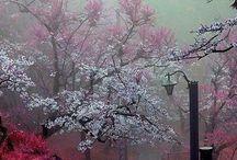 A A A....Tavasz...Spring