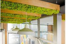 Moss art. / Minha paixão que cultivo dentro de lâmpadas.