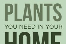 plants & home