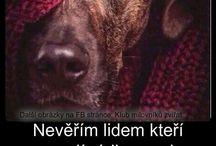♥ Dog ♥