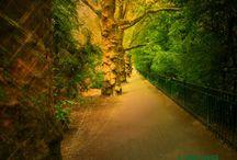 Treetreasure