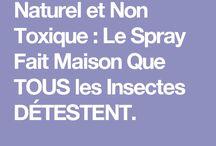 spray fait maison contre les însectes