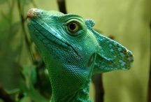 Lizards and more