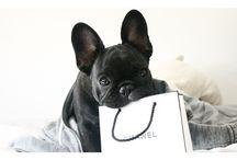 Puffi-Muffisar / Dogs