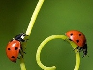 Good Bugs / Beneficial bugs and garden bugs. The kind of bugs you don't need pest control for.