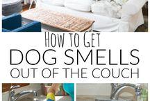 Dog smells