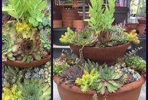 Pot de succulentes / Pot de succulentes