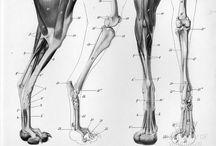 근육근육뼈뼈뼈