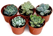 Succulents / Succulent plants love bright sun and will do quite well on a windowsill or on a porch.