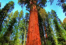 liefdesrelatie met bomen