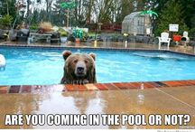 Funny Pool Memes / We love these hilarious, creative memes about pools!