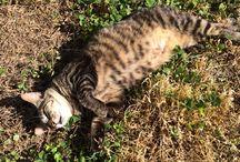 #aomori #japan #cat #kat #katt #chat #gatto  #katze #猫 #ねこ #野良猫パパラッチ