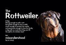 Rottweiler / I always dream of owning one some day #onefineday
