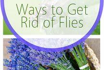 8 Ways to get rid of flies