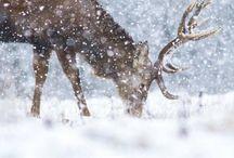 Vinter / Årstidens stemning,farger,aktiviteter,interiør,mat og høytider.
