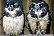 My Owl / null