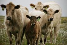 Kenna's Farm / by Debbie Coleman