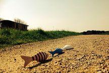 """Poissons d'avril / Joyeux 1er avril à tous...  Jolie histoire de """"mignons petits poissons bretons"""" durant leur séjour chez Dihan"""
