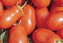Tomato pastes and sauces