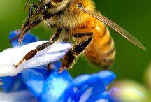 Eva Bee Project