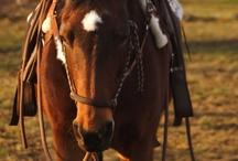 Horses... and stuff