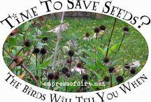 Fun bird feeders! / by Kim Svec