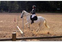Idées shopping cavalières Equestrian gift / Tapis de selle, pantalons d'équitation et accessoires écologiques pour le cheval et son cavalier #bujo #saddlepad #éthologie
