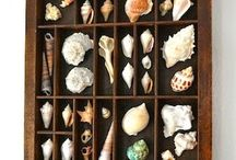 Coleção conchas