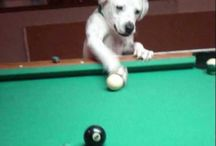Pool + Dawgs (etc) / Needless to say, us PoolDawgians love dogs. And what better way to enjoy pool than combining it will adorable animals! Have your own Pool Dawgs? Send us pics! (info@pooldawg.com)!