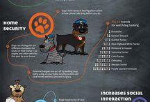 Infographic / by Marissa Sabrina