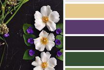 Color palette/Színpaletták