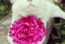 Cats & Flowers / Cats & Flowers