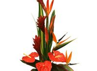 Flowers / Send Flowers to India, Fresh Flowers to India:Send Low Cost Flowers to India Same Day