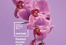 """PANTONE Yearly Colours / Annually, Pantone declares a particular color """"Color of the Year"""". The colour is used by fashion designers, florists, and many other consumer-oriented companies to help guide their designs and planning for future products."""