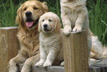 pets ♡