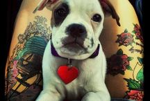 Cute Photos / Tattoos & Animals & Love & everything else!