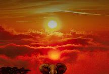ELEPHANTS & GIRAFFES / ELEPHANTS & OTHER WILD ANIMALS