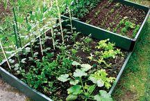 Gardening veg