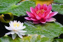 Cantinho das Flores - Natureza