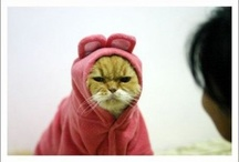 Cats take funnier pictures than dogs.. sometimes