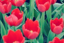 Flower poower.