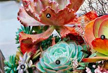 succulents / by Sunnyside Nursery