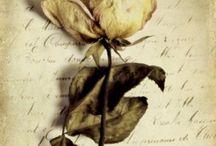 """Jolis Billets / """"Je voudrais écrire comme je t'aime. En une très longue lettre. Je voudrais faire ce progrès vers toi, réduire autant que possible la distance entre nous, l'ignorance qui la cause.. J'écris pour être lucide, j'écris pour mieux t'aimer. Ce ne sont pas des raisons d'écrivain, mais des raisons d'amoureuse."""" L'Amant - Mireille Sorgue"""