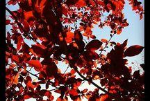 DISFRUTANDO DE MIS FOTOS DE INSTAGRAM / Las fotos que voy publicando en instagram, están realizadas con la cámara de mi móvil. La naturaleza, el tiempo, los troncos, las estaciones...