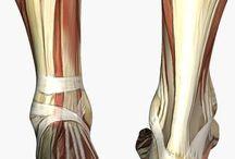 Anatomy resources